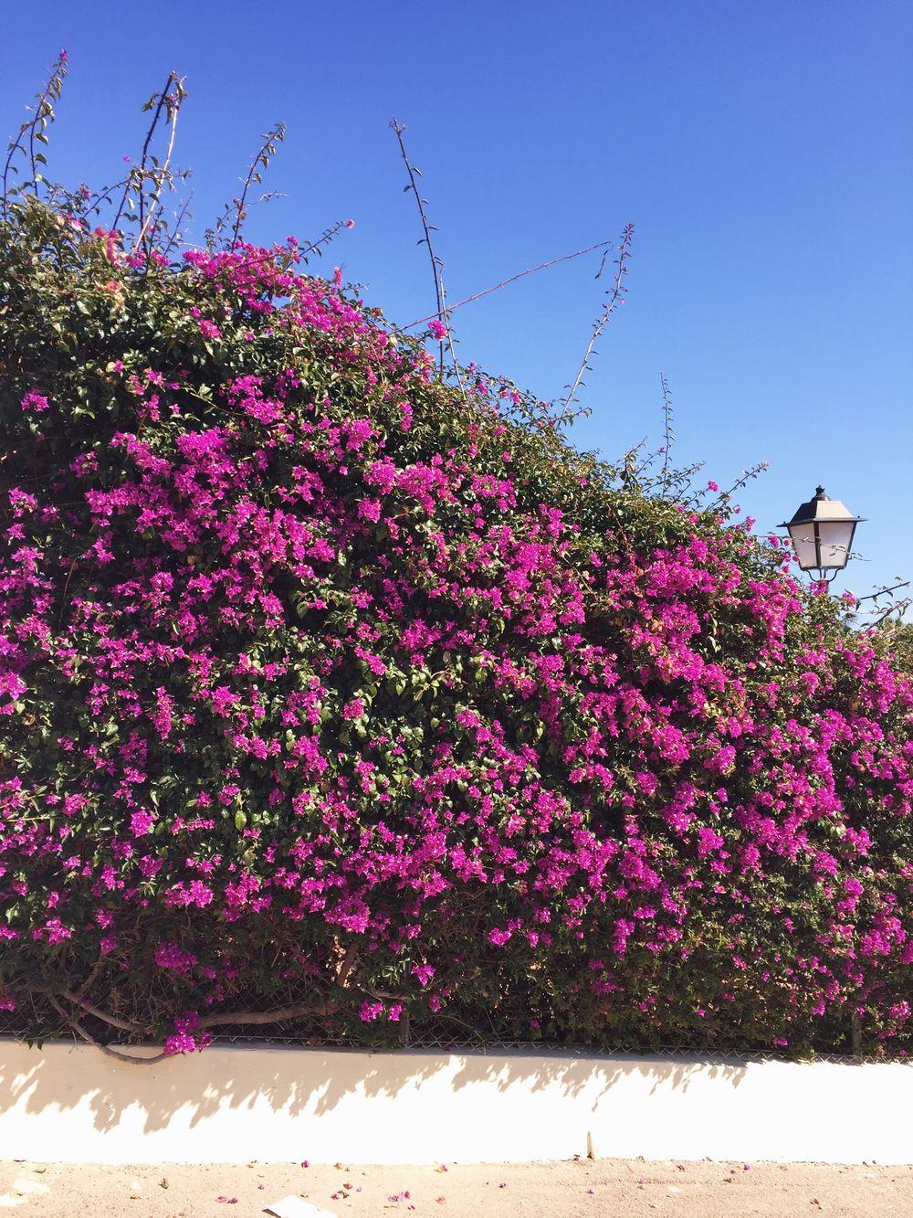 Inspirerande medelhavsträdgårdar